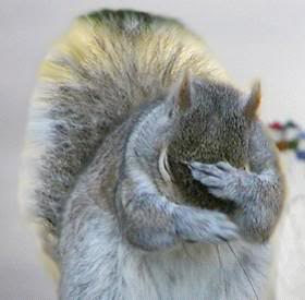 Squirrel Facepalm